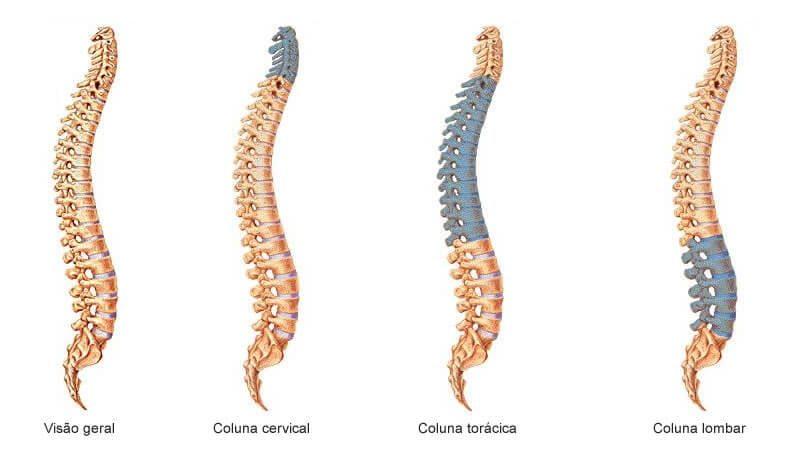 anatomia coluna lombar toracica e cervical