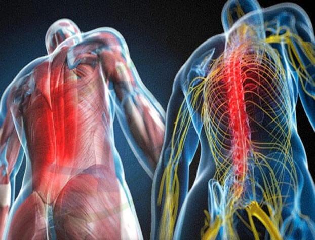 vertebrata - fibromialgia causa dor nas costas