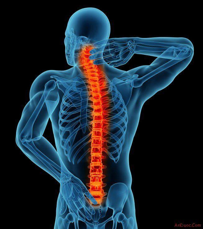 vertebrata - lombalgia