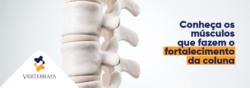 Fortalecimento dos músculos da coluna ajudam no tratamento de dores