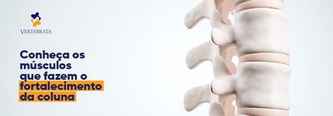 Conheça os músculos que fazem o fortalecimento da coluna